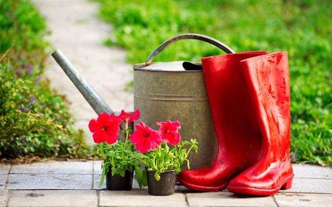 Astuces pour pelouse verte et plates-bandes fleuries - 1