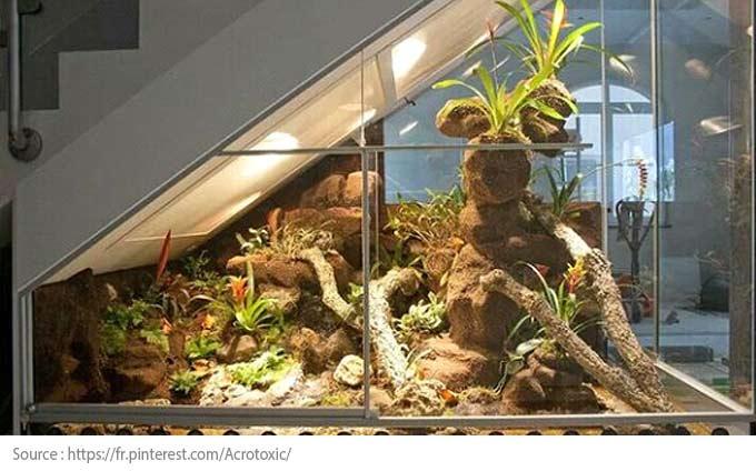Sous l'escalier : un terrarium