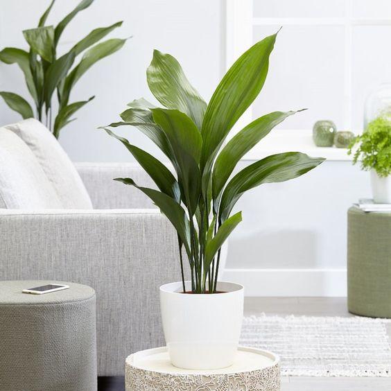 Plantes Non Toxiques Pour Votre Animal Centris Ca