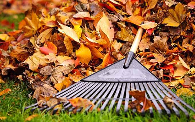Rateau avec feuilles d'automne