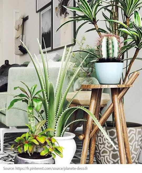 Tendances déco : 10 objets indispensables! - La plante