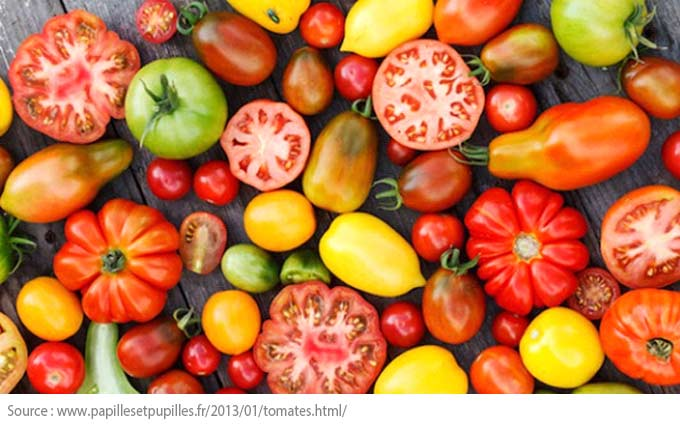 A Beginner's Guide to Vegetable Gardens - Tomatoes