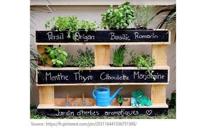 A Beginner's Guide to Vegetable Gardens - Fine herbs