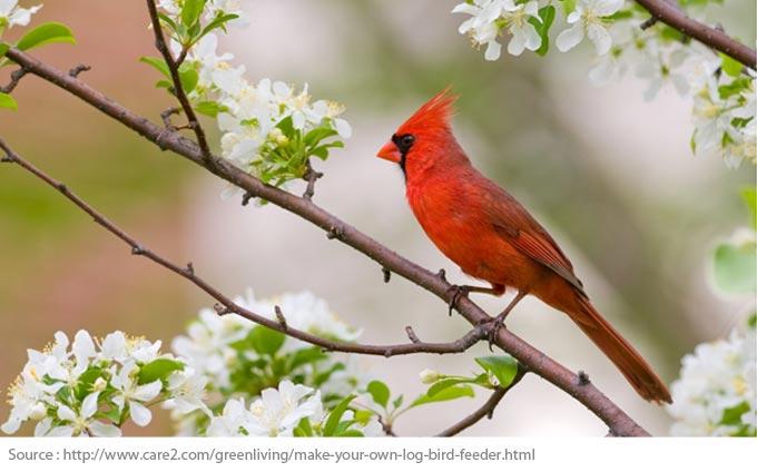 Comment créer un terrain accueillant pour les oiseaux